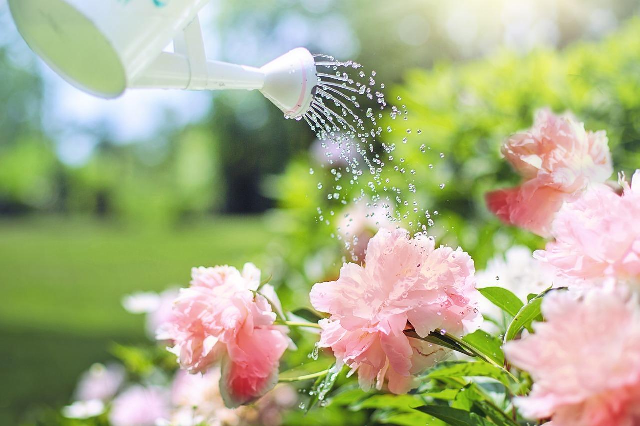 Comment Arroser Mes Plantes Pendant Les Vacances 10 solutions pour arroser ses plantes pendant les vacances